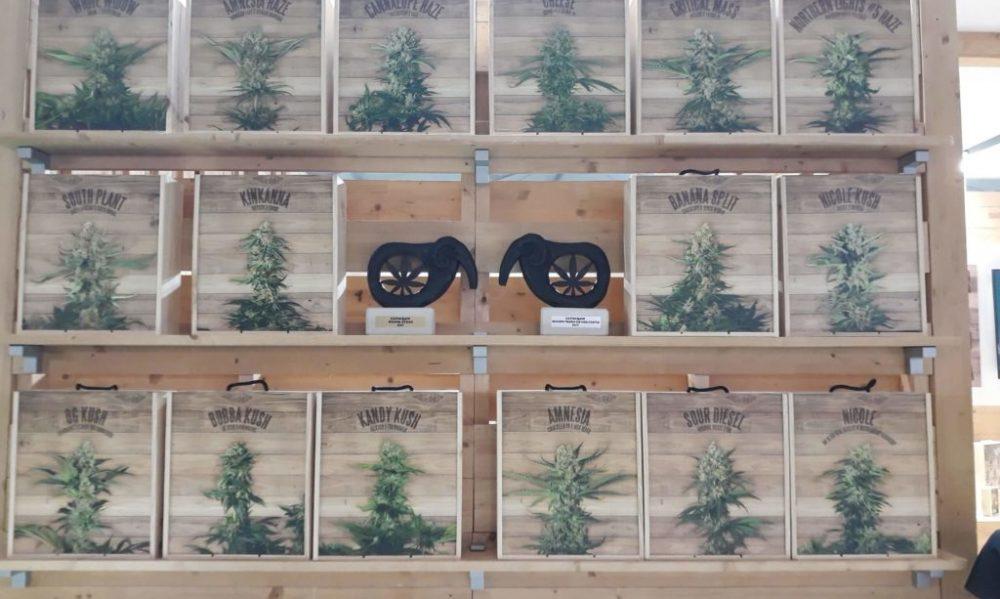 марихуана семки видове