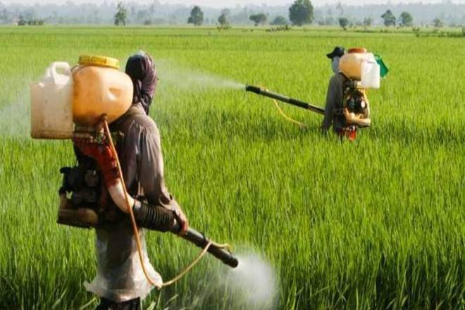 pesticidi praskane cannaroots-bg